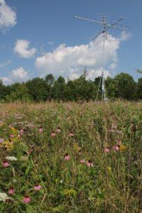 DWMA Wildflowers