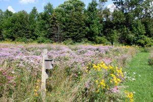 Nesting box with Wildflowers