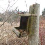 Bird Feeder at DWMA
