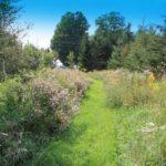 DWMA path