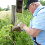 Removing old nesting material so renesting can occur