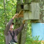 Wood Deck Nest Maintenance