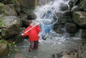 Carrying a salmon form upper pool
