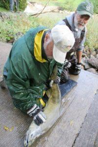 Checking Salmon