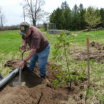 Tree planting on DWMA